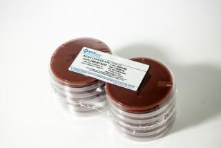 Imagem para o produto ÁGAR CHOCOLATE SUPLEMENTADO (Placa)