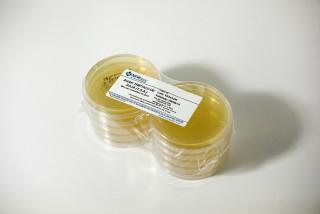 Imagem para o produto ÁGAR TRIPTICO DE SOJA (TSA) pcte c/ 10 placas 90x15mm