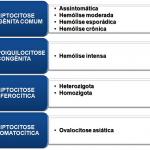 Quadro 1 - Classificação da Eliptocitose