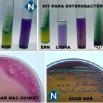Imagem 5 - Bactéria 1